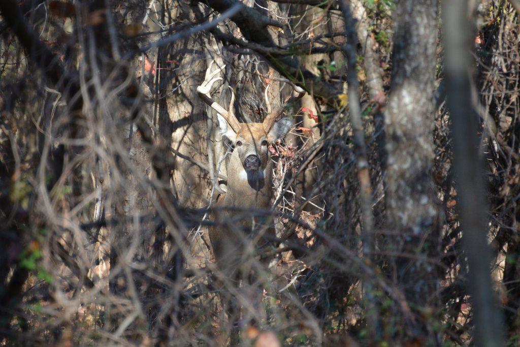 More Than 13K Deer Harvested During Md. Firearm Season Opening Weekend