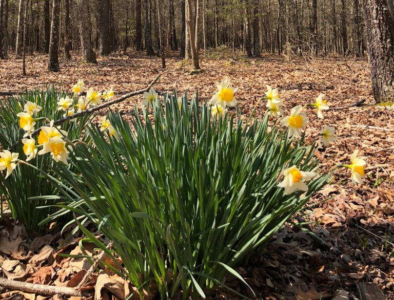 Pocomoke State Forest to Expand