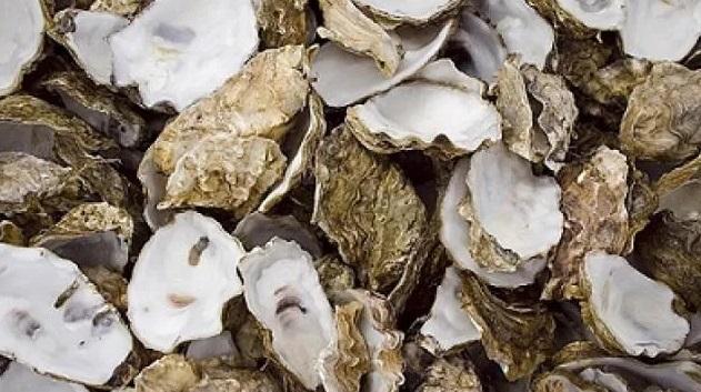Shellfish Aquaculture Gets Underway in Delaware's Inland Bays