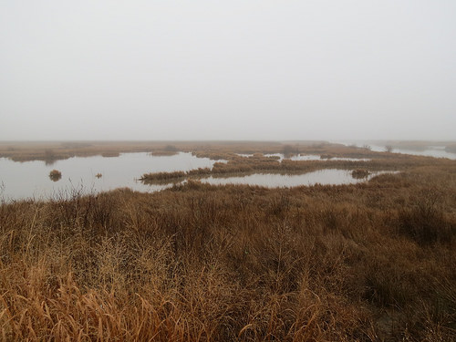 Eastern Shore Waterfowl Hunting Applications Now Being Accepted