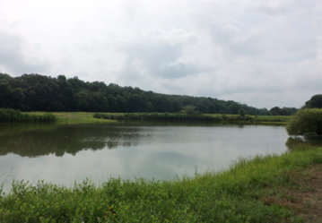New Wildlife Management Area Slated for Queen Anne's County