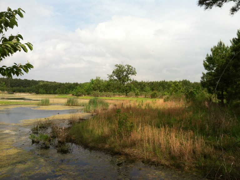 Maryland Environmental Trust Protects 50 Acres in Talbot County
