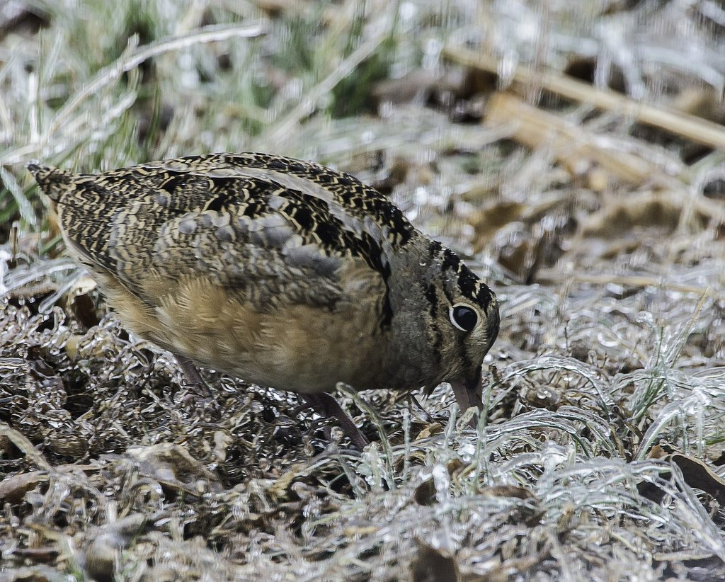 Maryland's Early Migratory Game Bird Hunting Seasons Announced