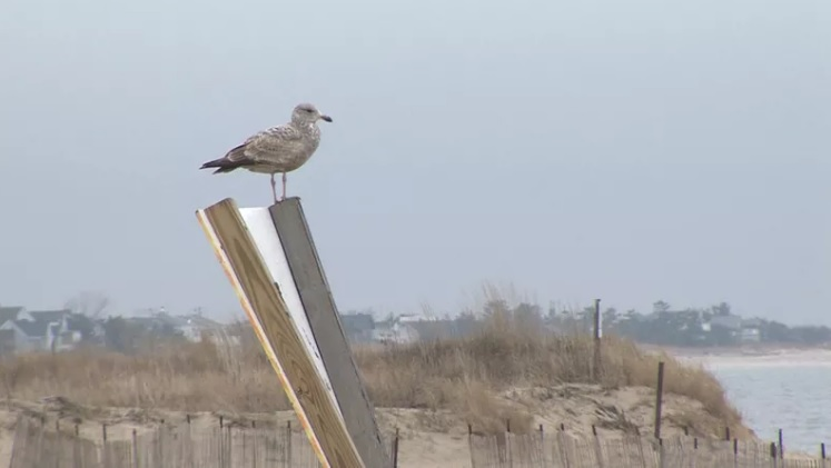 Point at Cape Henlopen to Reopen Sept. 1 Following Closure for Beachnesting Season