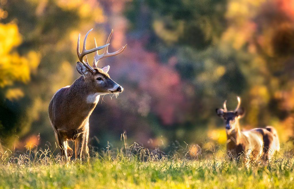 Maryland Deer Archery Season Opens Sept. 7