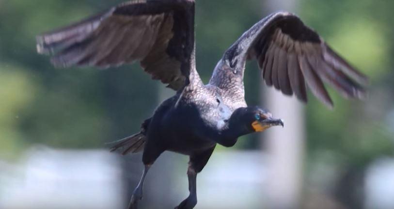 2019 Winter Delmarva Birding Weekend