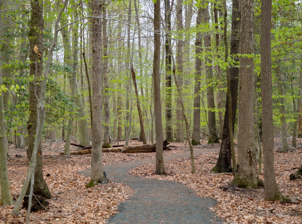 Fork Branch Nature Preserve in Dover Expanding