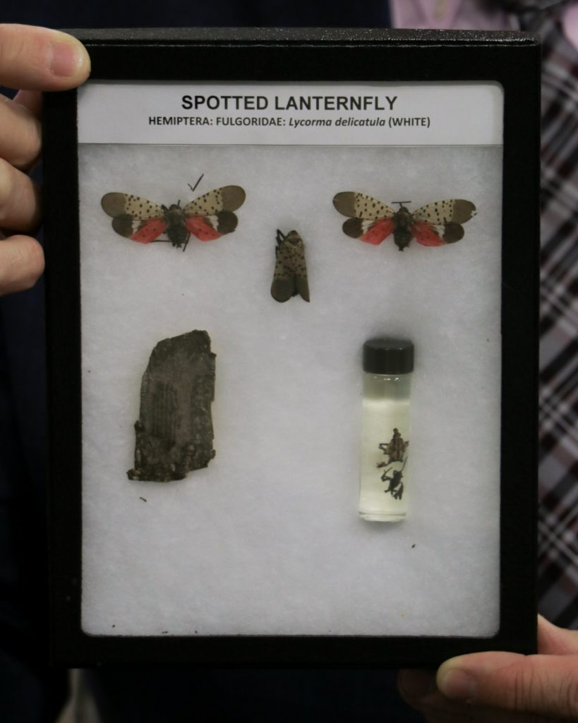 The Threat of the Spotted Laternfly