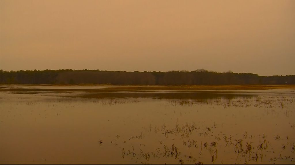 Travels With Charlie: Water in the Blackwater Refuge