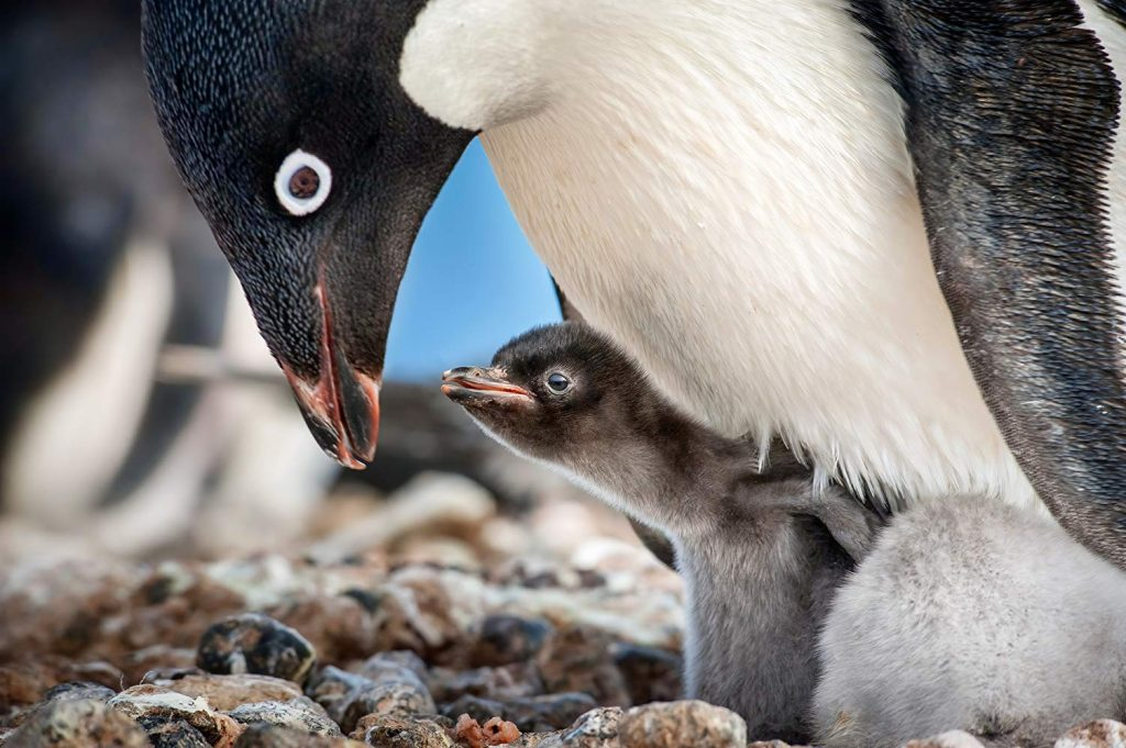 Movie Review – Penguins (2019)