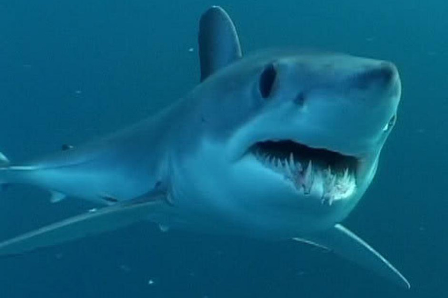 New Fishing Rules Designed to Protect Vulnerable Shark