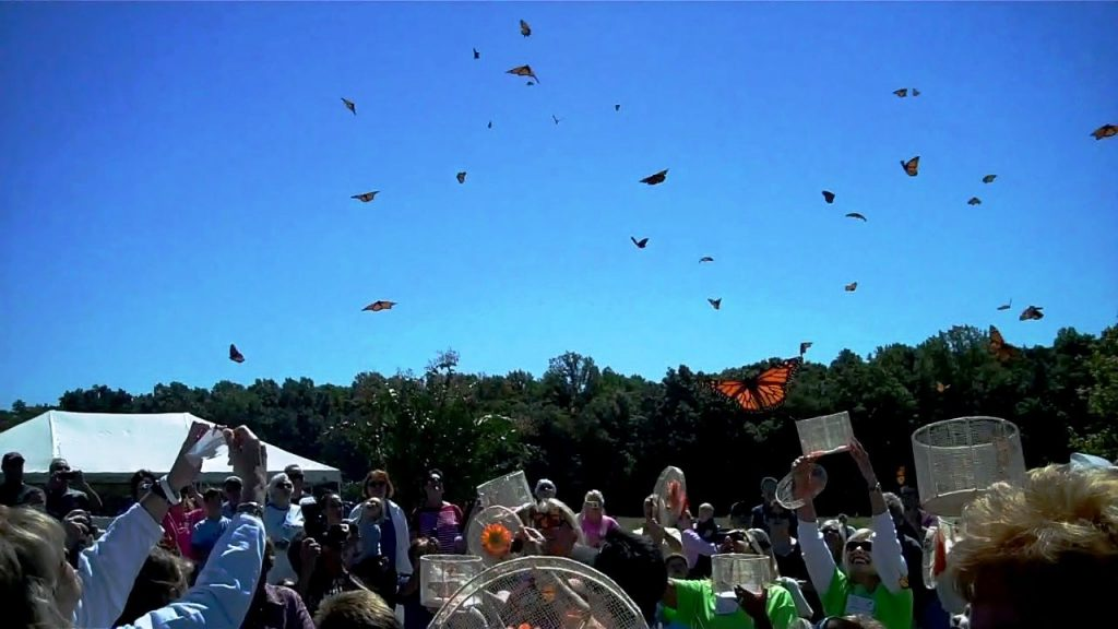 Wings of Hope: A Butterfly Release, June 2