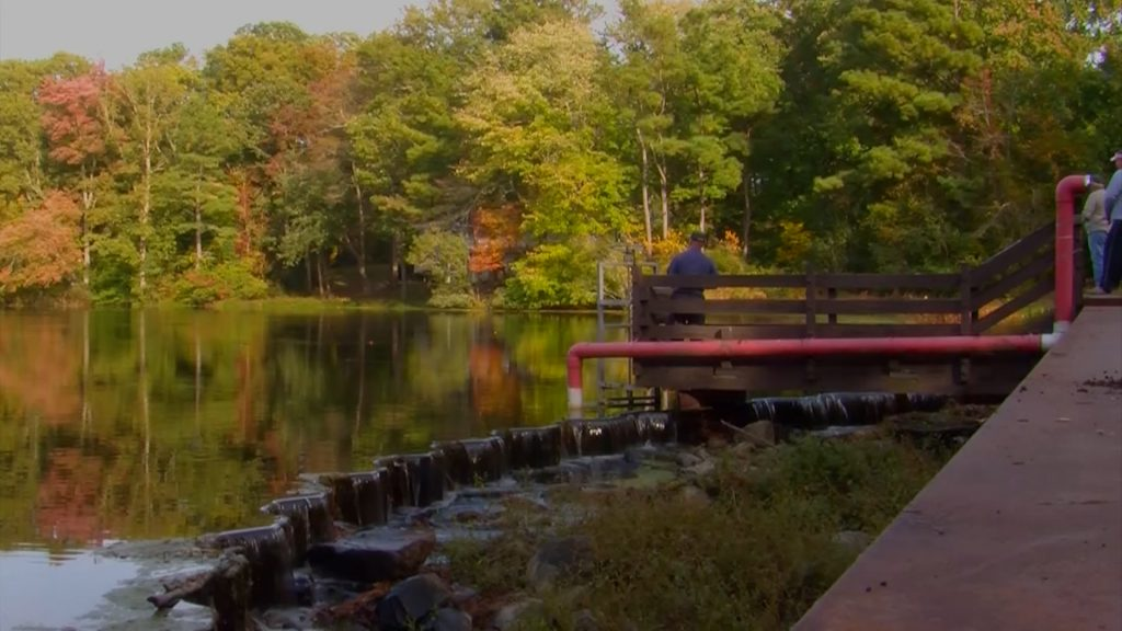 Travels With Charlie: Fishing at a Millpond