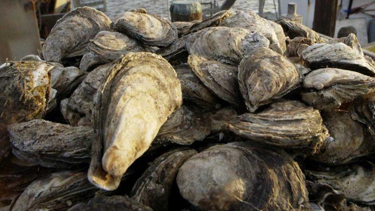 Oyster Watermen (and Waterwomen)