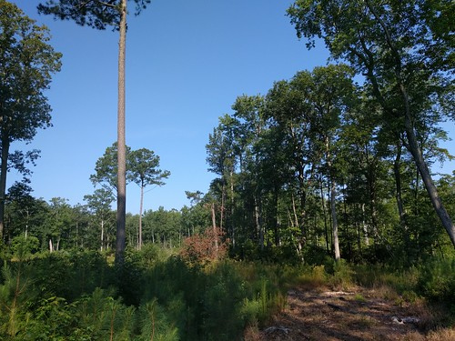 Comment Deadline Extended on Chesapeake Forest Hunting Leases