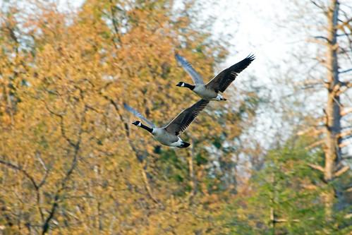Delaware Hunting Seasons Opening in September