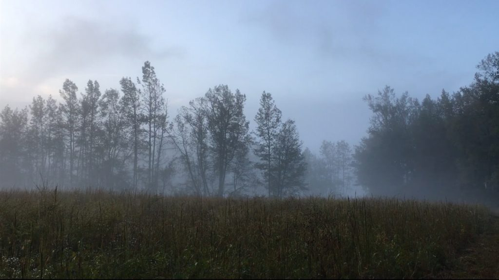 Travels With Charlie: The Sound Fog Makes