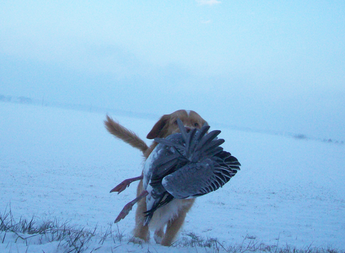 Delaware Div. of Fish & Wildlife Announces Hunting and Trapping Seasons Opening in December