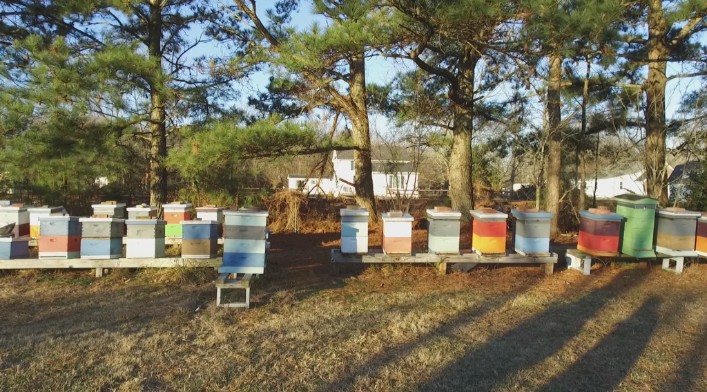 Bee Colonies Flourishing Despite Trying Times