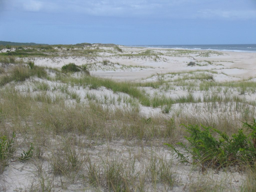 Assateague Island National Seashore Makes Changes to Over-Sand Vehicle Permit Pricing and Structure