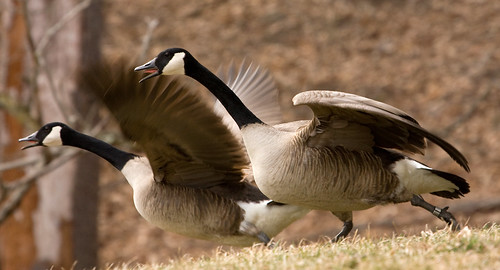 2020-2021 Migratory Game Bird Hunting Seasons Set to Begin in Md.
