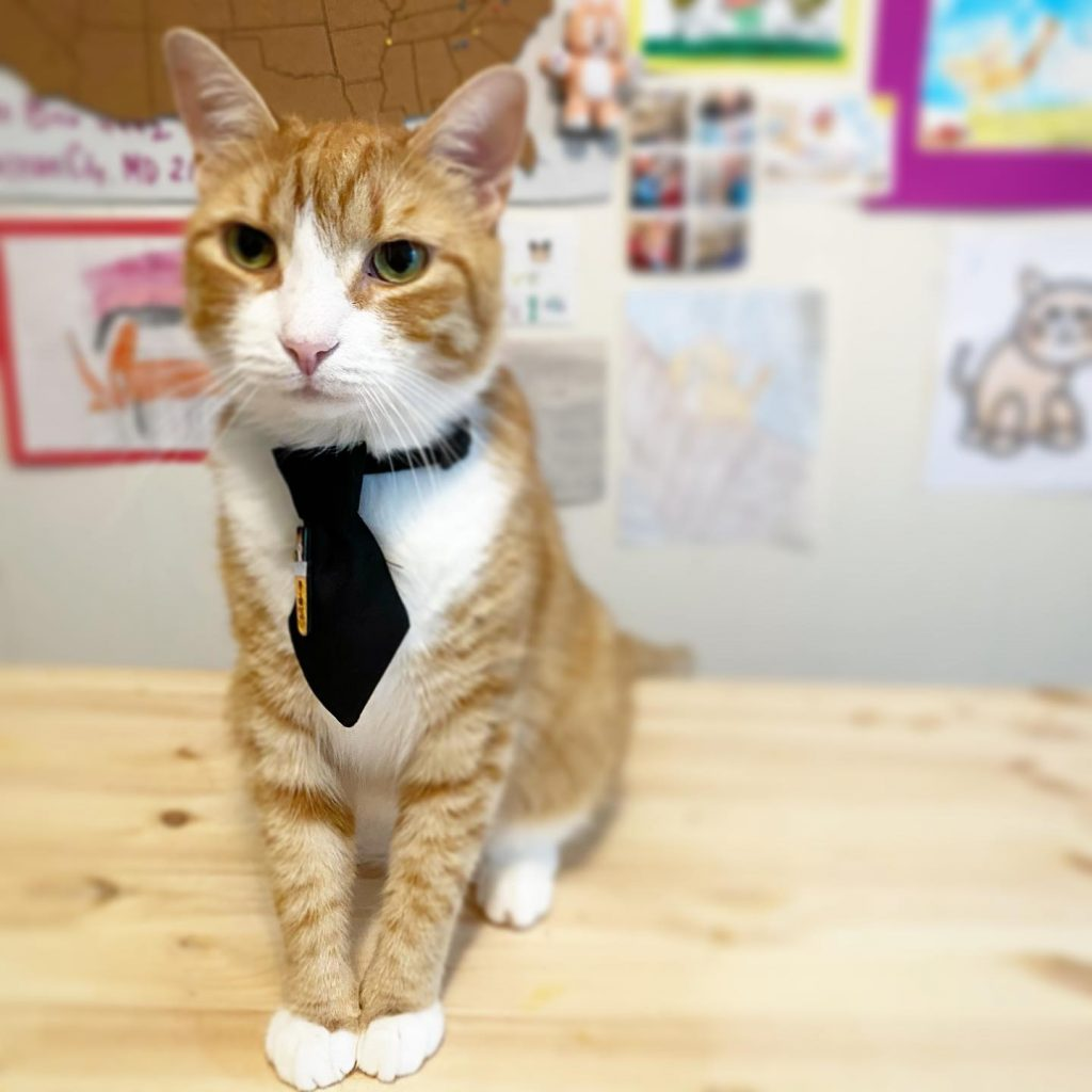 Vote For Pip The Beach Cat