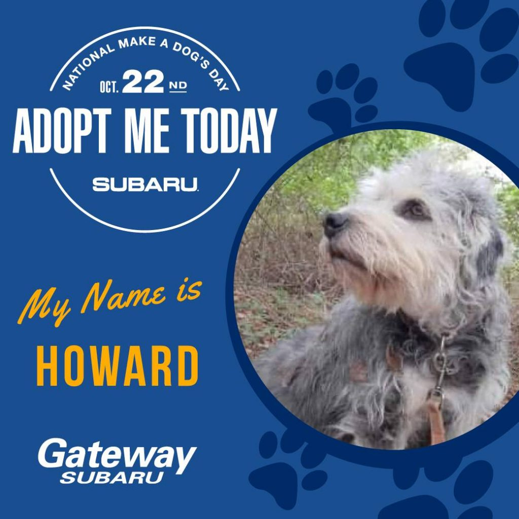 Gateway Subaru and Worcester Humane Partnering To 'Make A Dog's Day'
