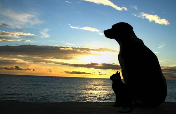 Talbot Humane Starting Pet Loss Support Group