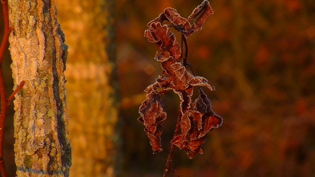 Travels With Charlie: Frosty Dawn