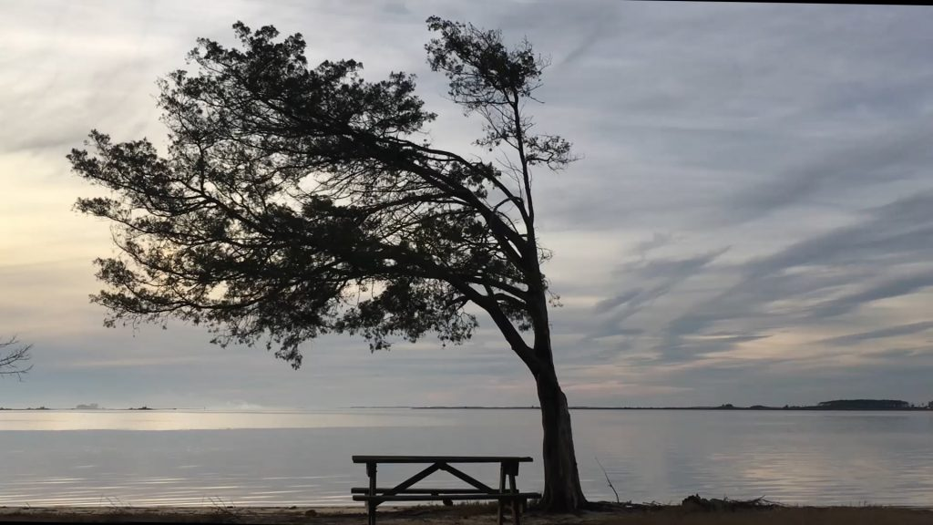 Travels With Charlie: Raccoon Point