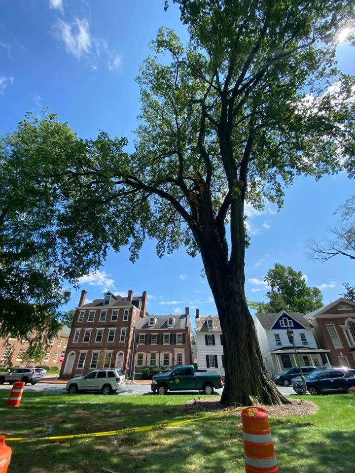 Delaware's Urban and Community Forest Program Offering Matching Grants for Planting Trees