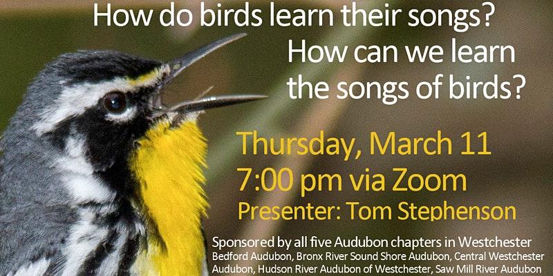 How do Birds Learn Their Songs?