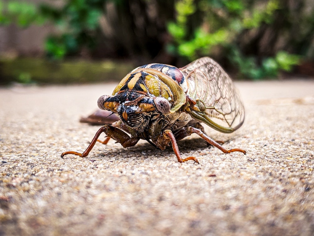 Dr. Brian Kunkel On The Cicada Invasion