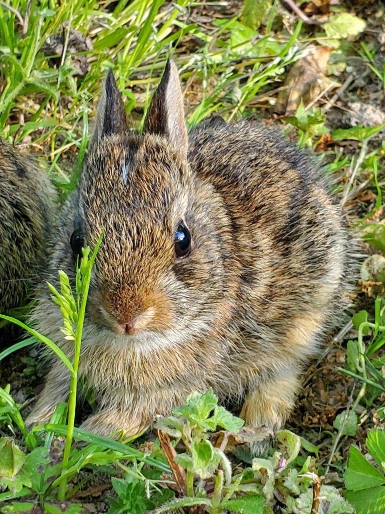 Tonyea Mead – Baby Bunny Season