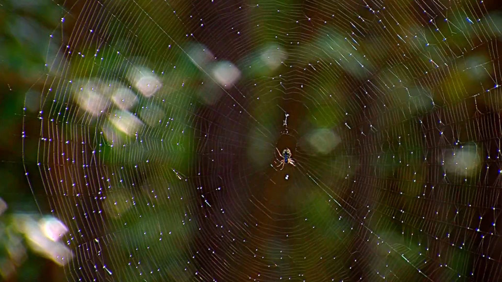 Travels With Charlie: Spider Spinning Its Web