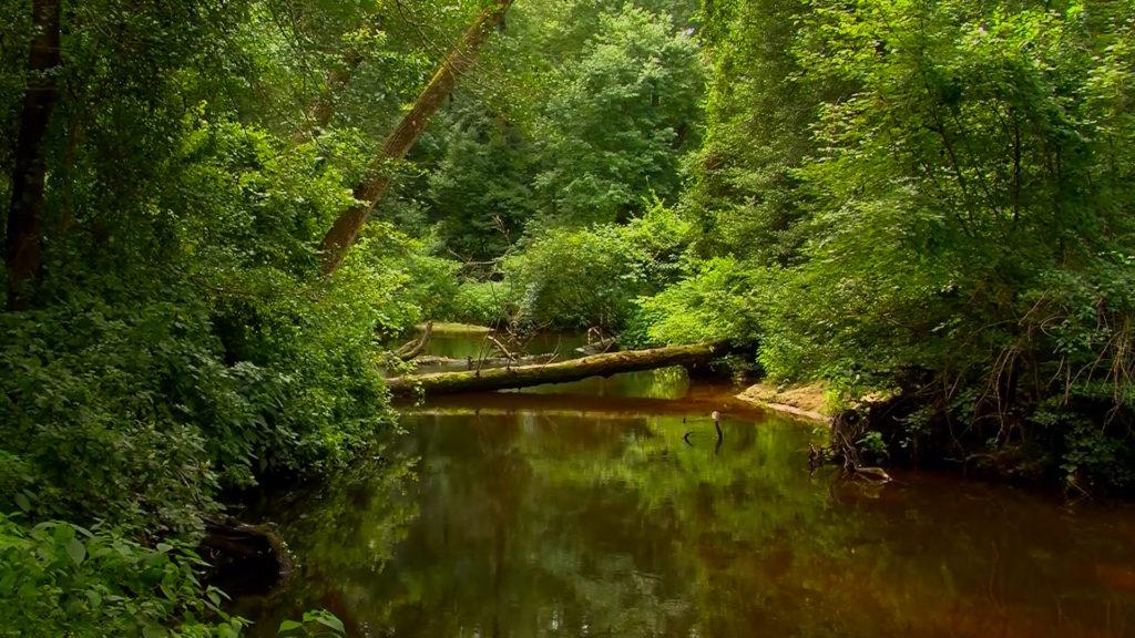 Travels With Charlie: Beaverdam Creek