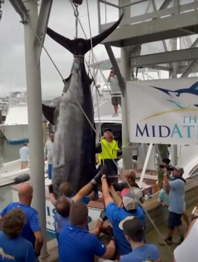 We Talk To The Crew That Hauled in a Record Breaking Fish During This Year's Mid Atlantic Tournament