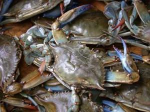 BlueCrabs