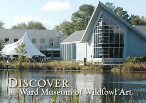 ward museum